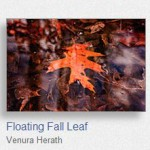Floating Fall Leaf