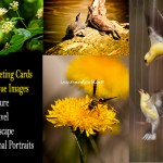Nature Greeting Cards