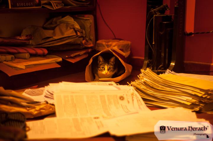 Parcel Cat