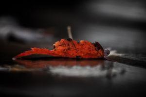 Fall-125-Edit.jpg
